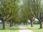 200px-Llandaff_Fields_path
